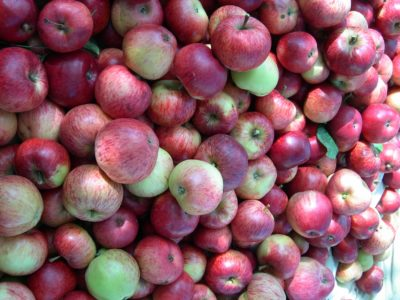 Browns Apple ripe for pressing